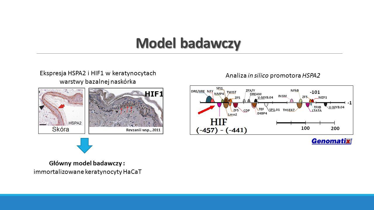 Główny model badawczy :