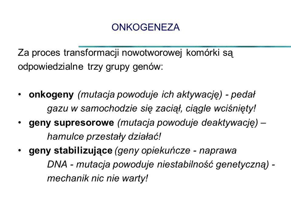 ONKOGENEZA Za proces transformacji nowotworowej komórki są. odpowiedzialne trzy grupy genów: onkogeny (mutacja powoduje ich aktywację) - pedał.