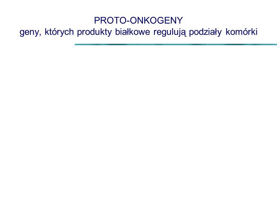 PROTO-ONKOGENY geny, których produkty białkowe regulują podziały komórki