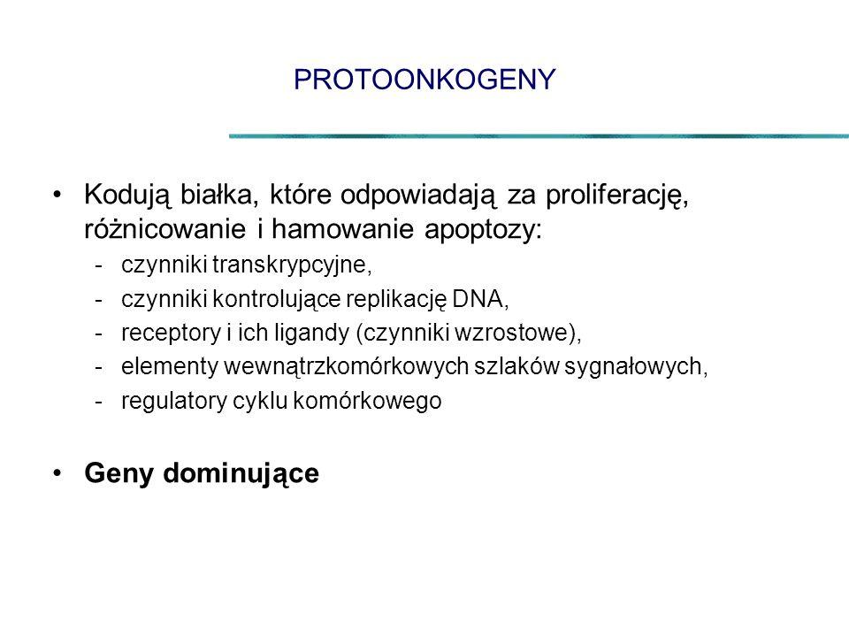 PROTOONKOGENY Kodują białka, które odpowiadają za proliferację, różnicowanie i hamowanie apoptozy: czynniki transkrypcyjne,