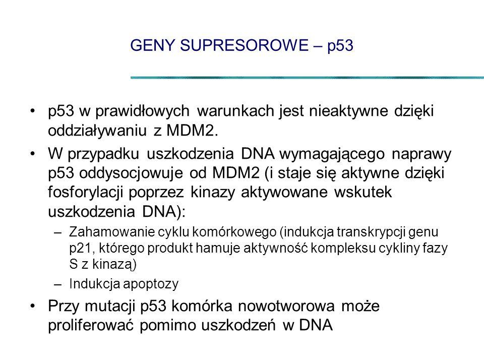 GENY SUPRESOROWE – p53 p53 w prawidłowych warunkach jest nieaktywne dzięki oddziaływaniu z MDM2.