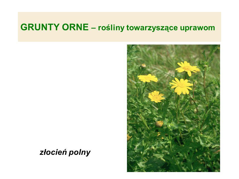 GRUNTY ORNE – rośliny towarzyszące uprawom