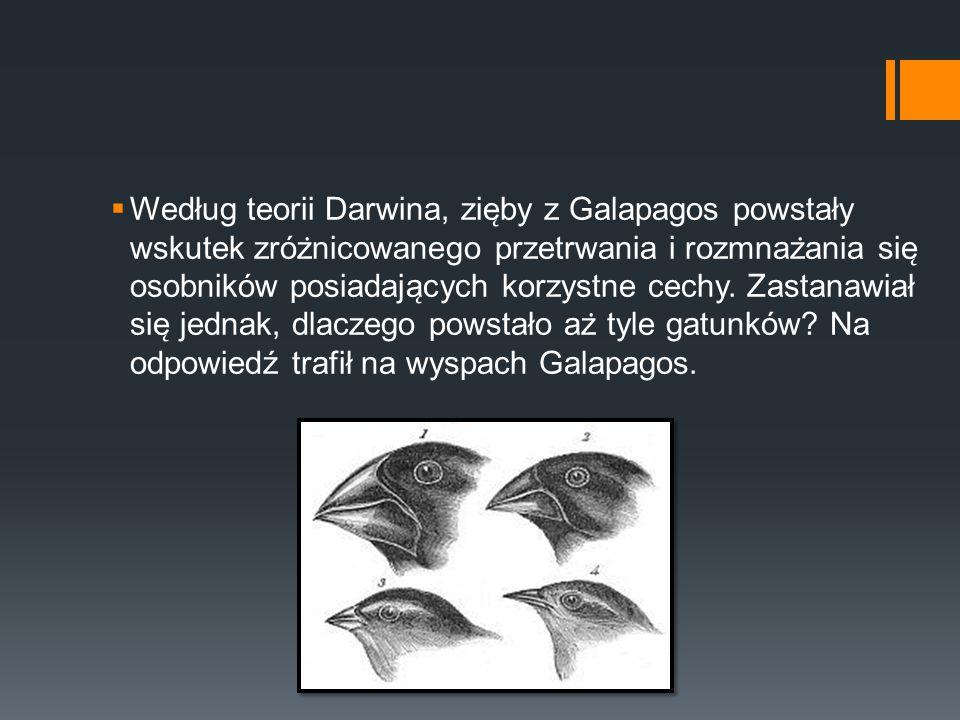 Według teorii Darwina, zięby z Galapagos powstały wskutek zróżnicowanego przetrwania i rozmnażania się osobników posiadających korzystne cechy.