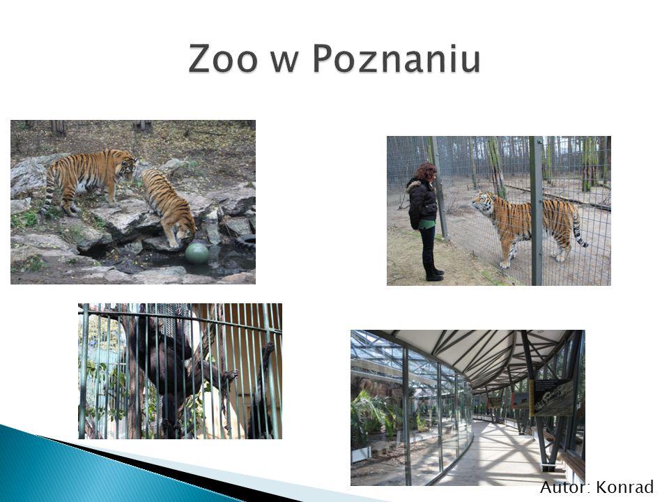 Zoo w Poznaniu Autor: Konrad