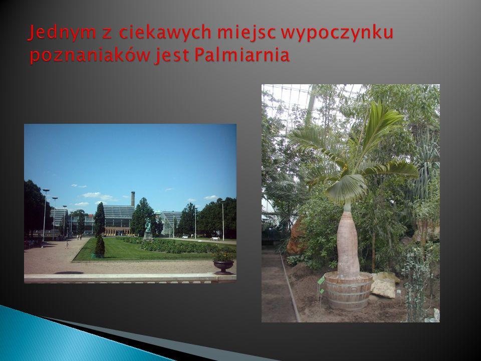 Jednym z ciekawych miejsc wypoczynku poznaniaków jest Palmiarnia