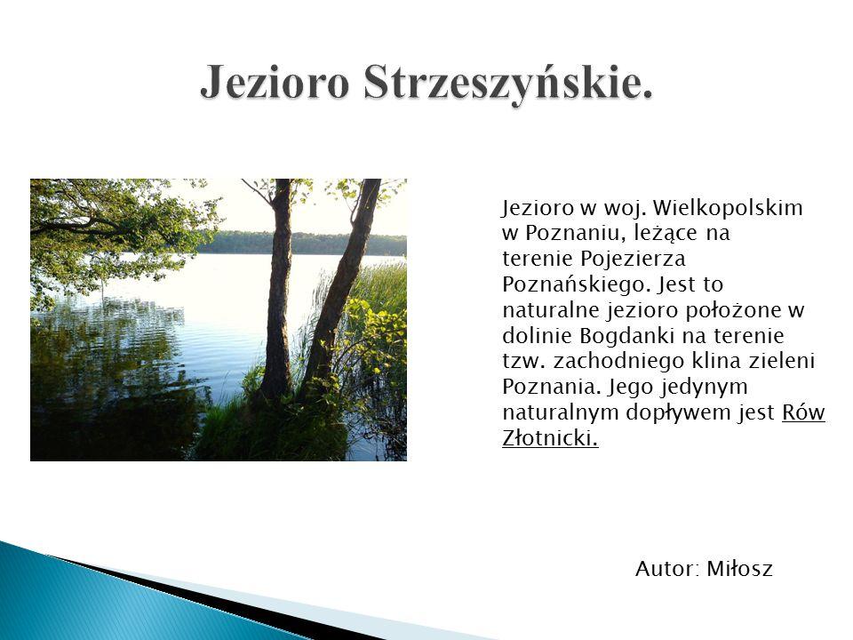 Jezioro Strzeszyńskie.