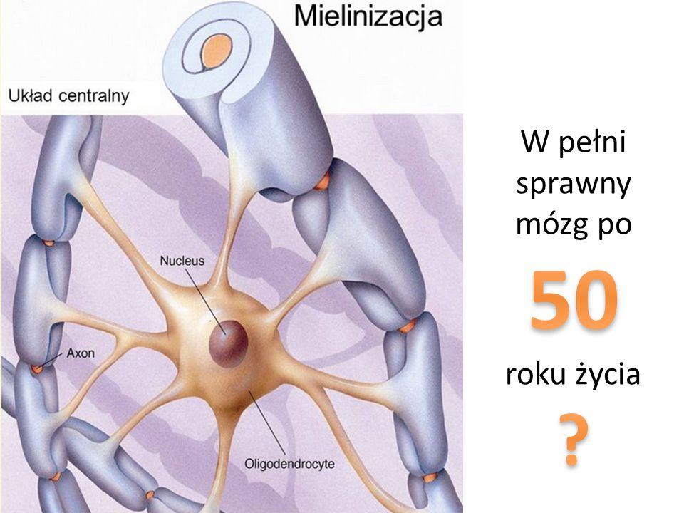 W pełni sprawny mózg po 50 roku życia