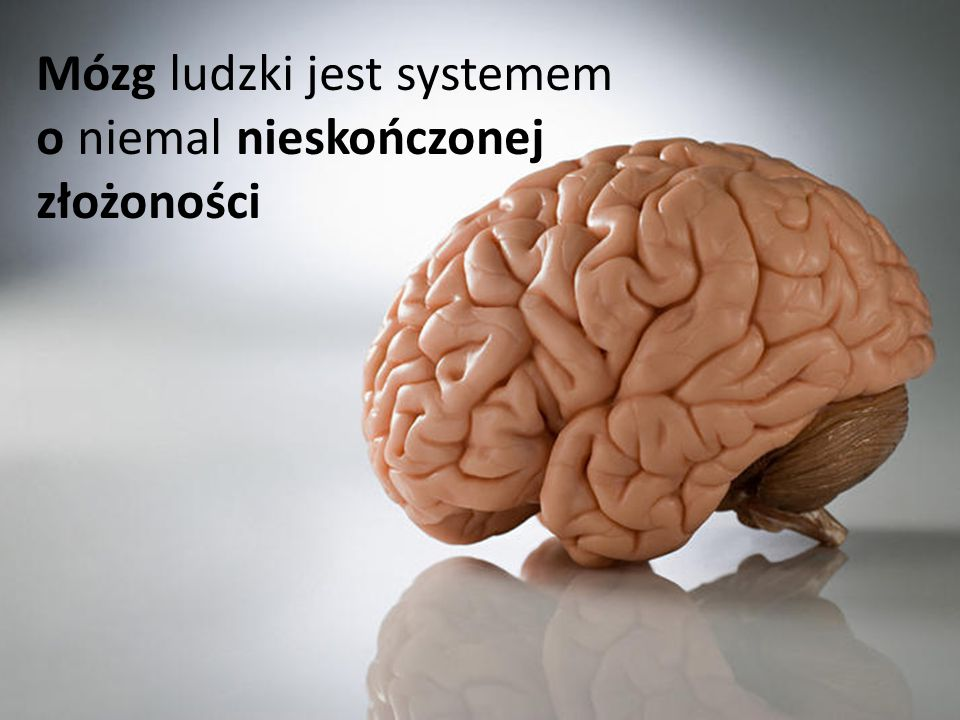 Mózg ludzki jest systemem