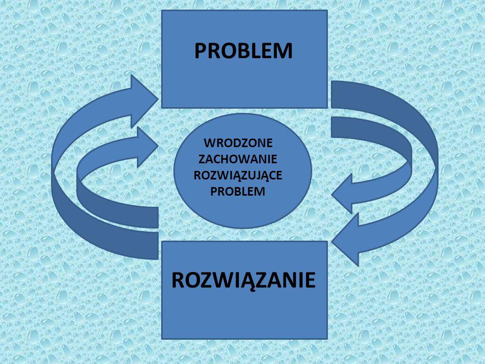 WRODZONE ZACHOWANIE ROZWIĄZUJĄCE PROBLEM