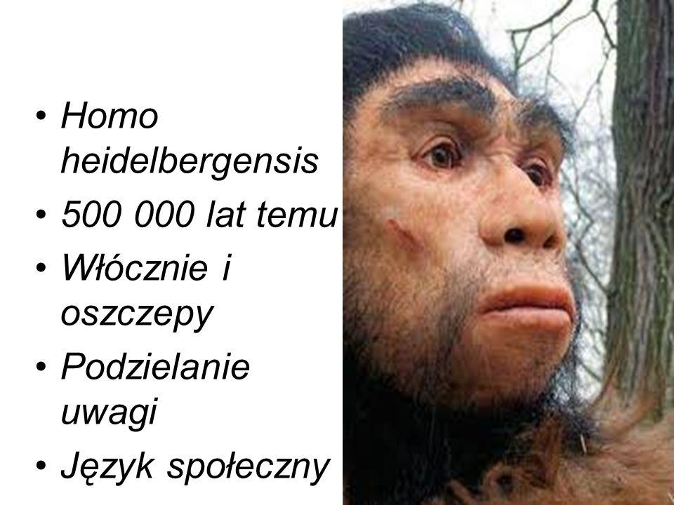Homo heidelbergensis 500 000 lat temu Włócznie i oszczepy Podzielanie uwagi Język społeczny