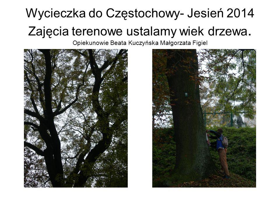 Wycieczka do Częstochowy- Jesień 2014 Zajęcia terenowe ustalamy wiek drzewa.