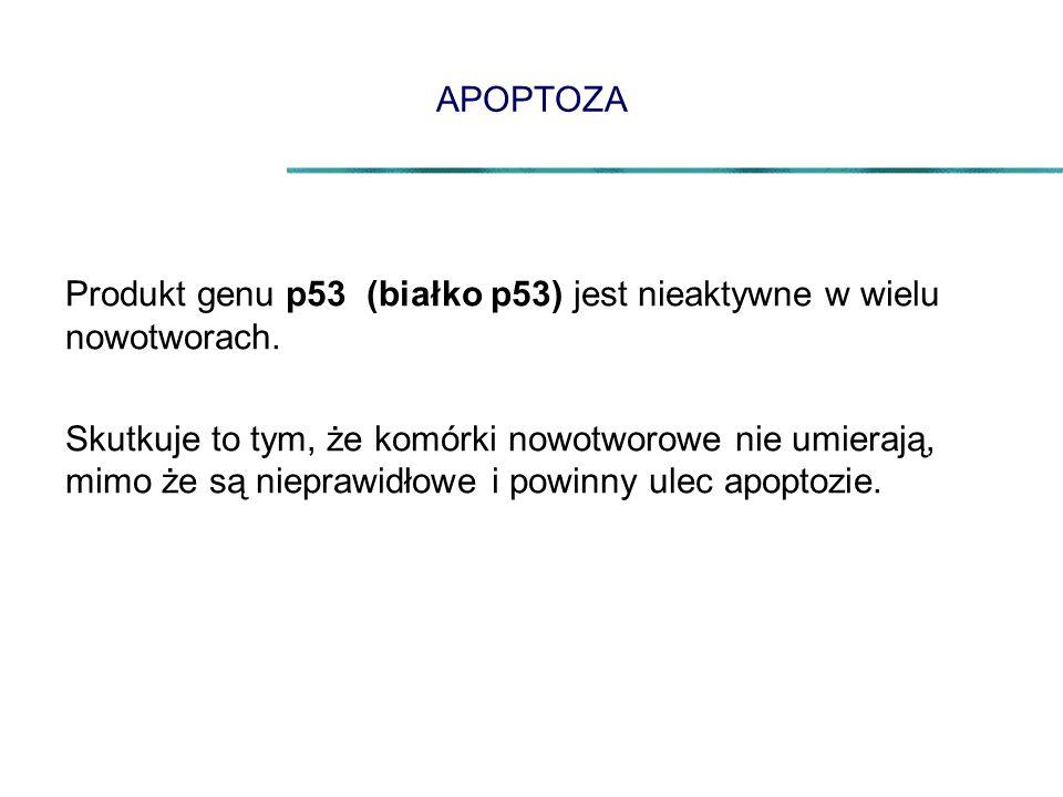 APOPTOZA Produkt genu p53 (białko p53) jest nieaktywne w wielu nowotworach.