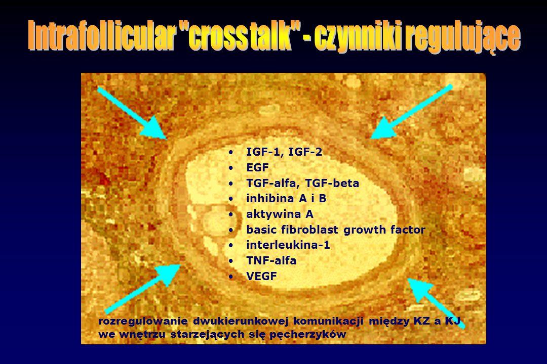 Intrafollicular cross talk - czynniki regulujące