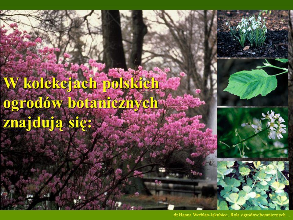 W kolekcjach polskich ogrodów botanicznych znajdują się: