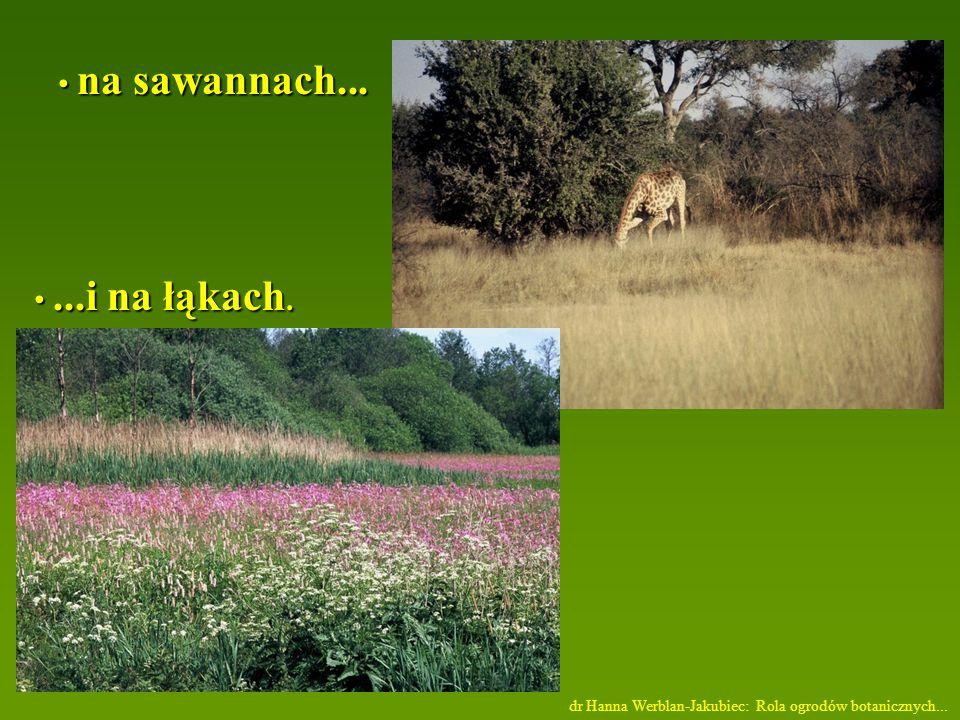 na sawannach... ...i na łąkach.