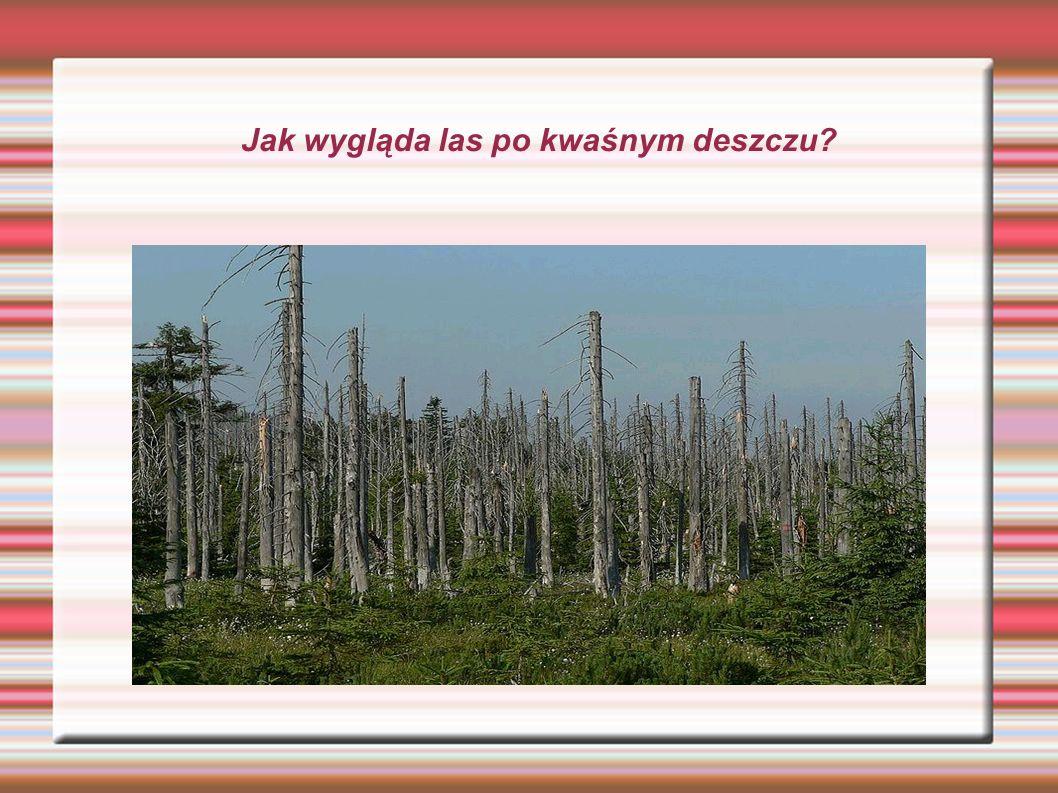 Jak wygląda las po kwaśnym deszczu