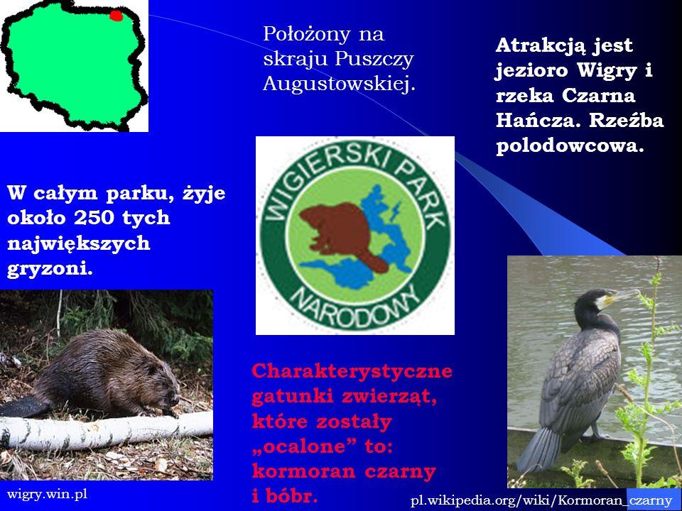 Położony na skraju Puszczy Augustowskiej.