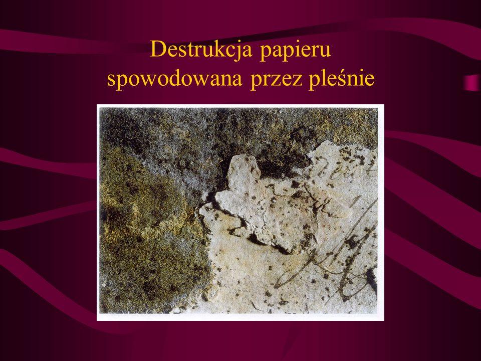 Destrukcja papieru spowodowana przez pleśnie