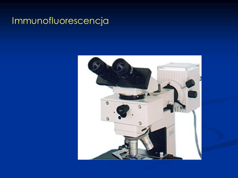 Immunofluorescencja