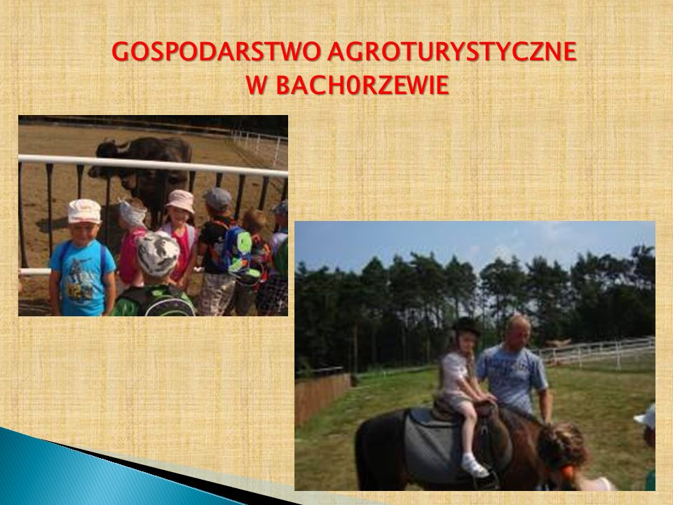 GOSPODARSTWO AGROTURYSTYCZNE W BACH0RZEWIE