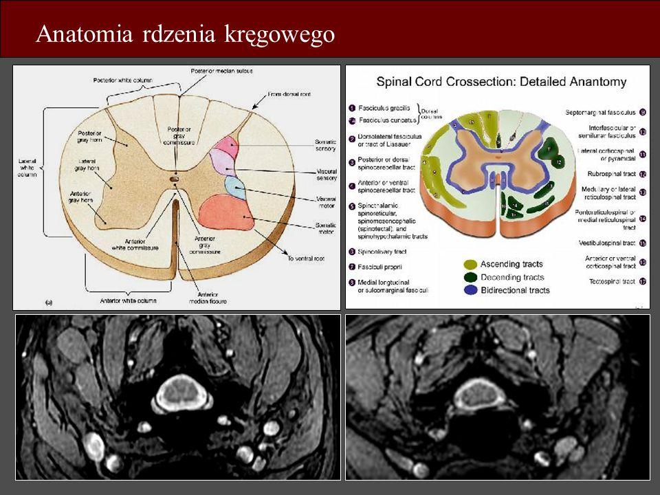 Anatomia rdzenia kręgowego