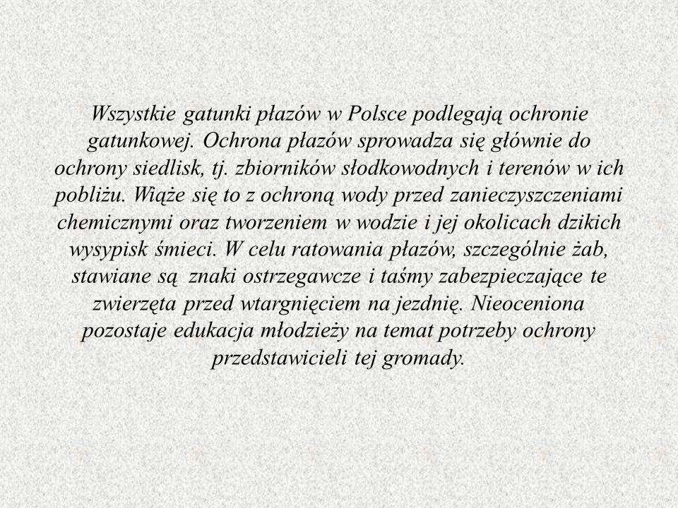 Wszystkie gatunki płazów w Polsce podlegają ochronie gatunkowej