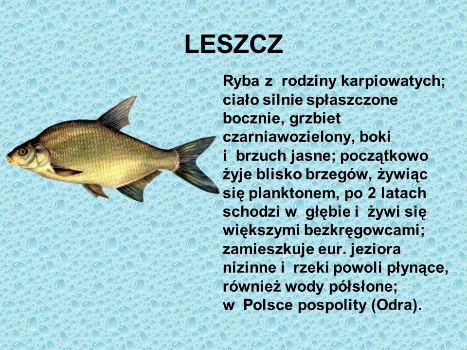 LESZCZ