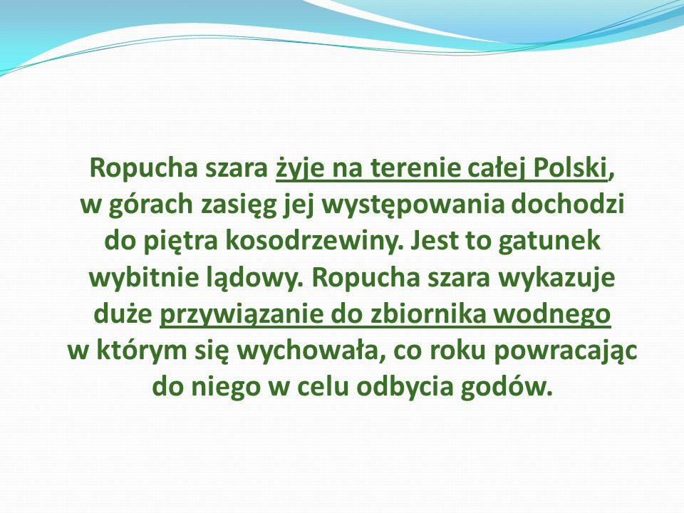 Ropucha szara żyje na terenie całej Polski, w górach zasięg jej występowania dochodzi do piętra kosodrzewiny.