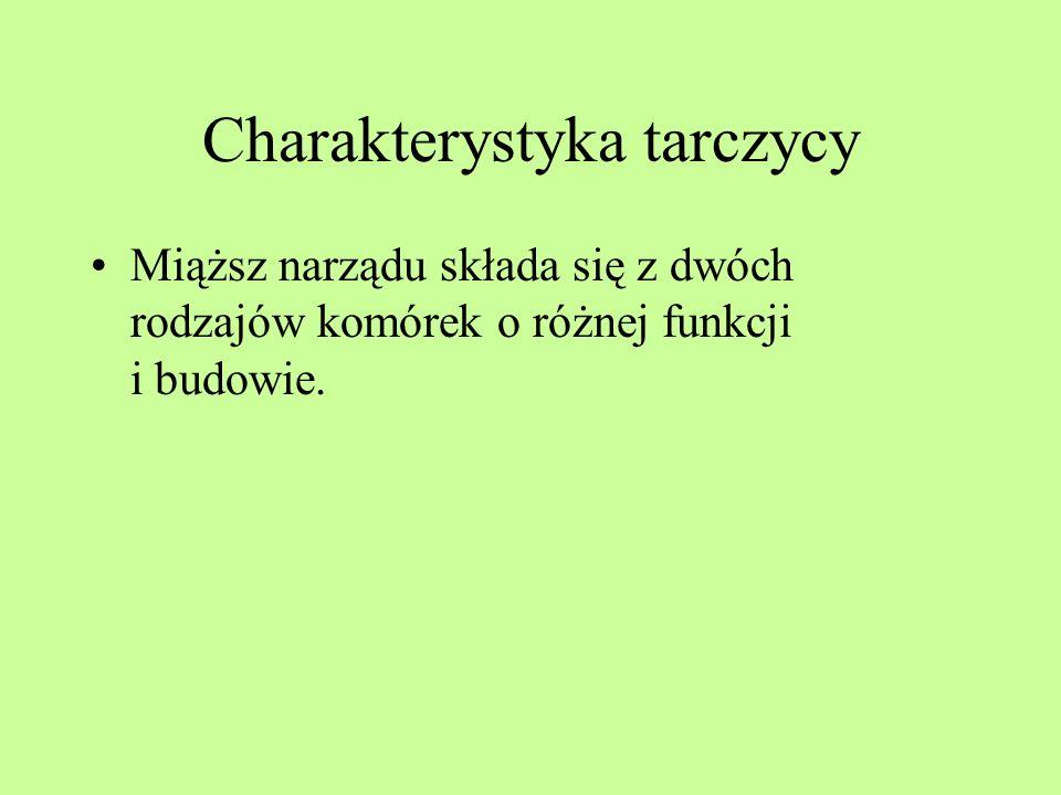 Charakterystyka tarczycy