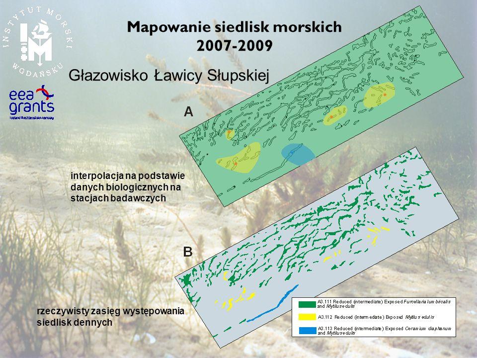 Mapowanie siedlisk morskich 2007-2009
