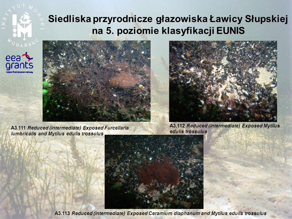Siedliska przyrodnicze głazowiska Ławicy Słupskiej na 5