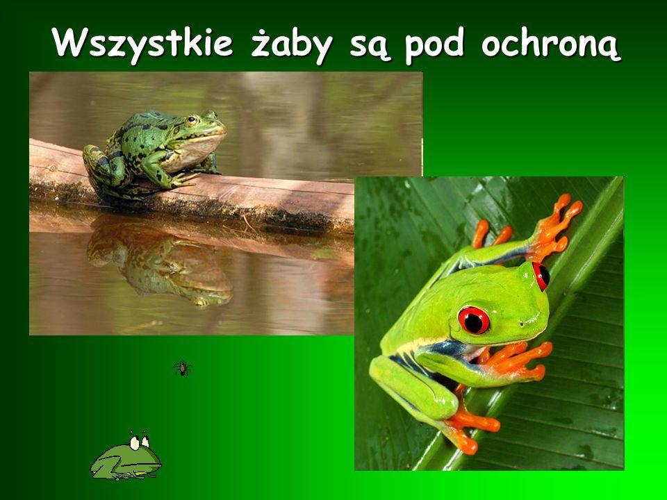 Wszystkie żaby są pod ochroną