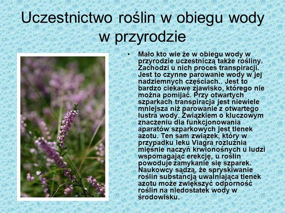 Uczestnictwo roślin w obiegu wody w przyrodzie