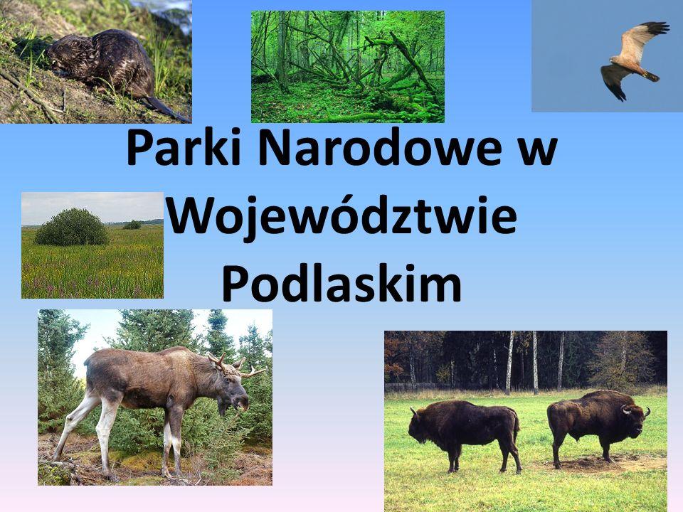 Parki Narodowe w Województwie Podlaskim