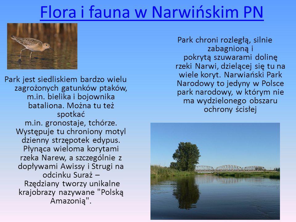Flora i fauna w Narwińskim PN
