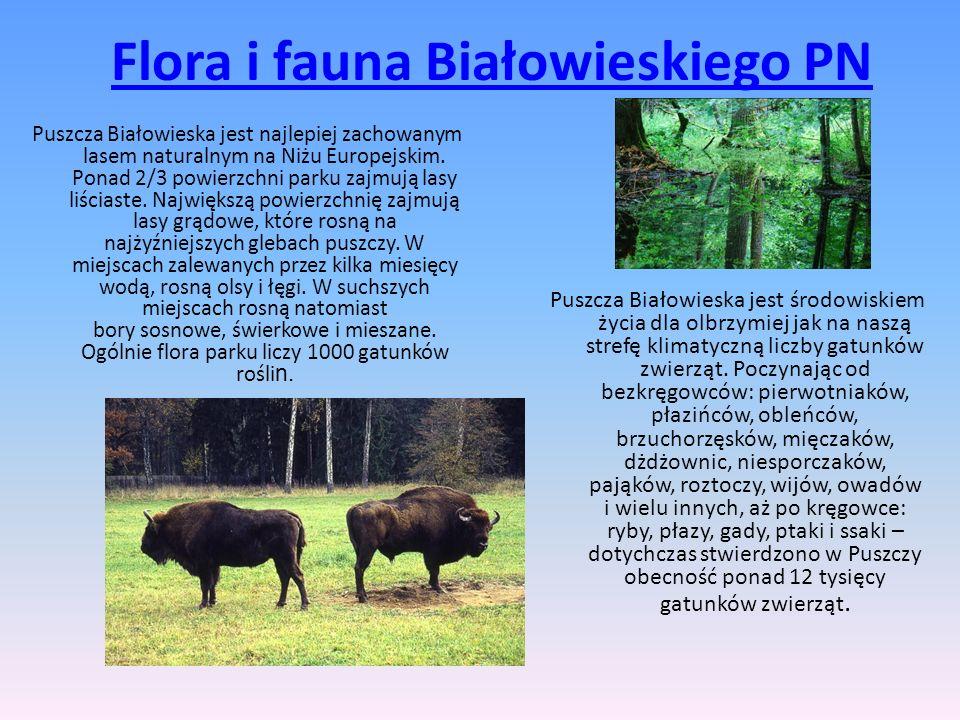 Flora i fauna Białowieskiego PN