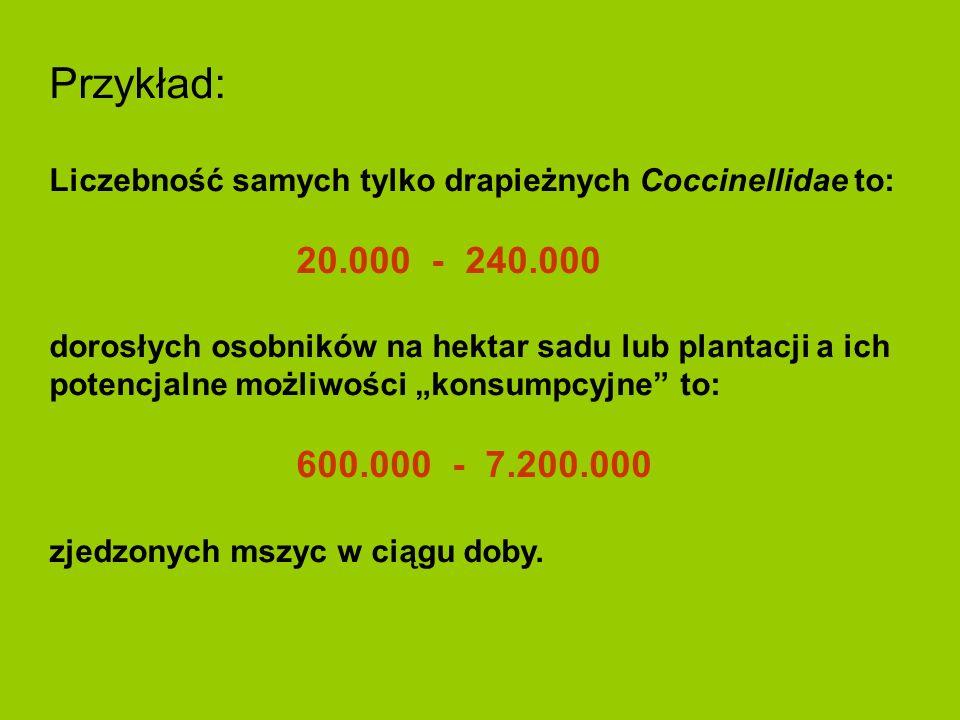 Przykład: Liczebność samych tylko drapieżnych Coccinellidae to: