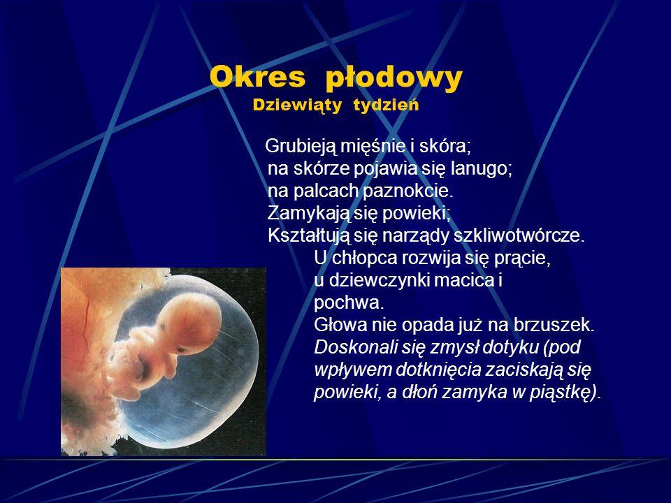 Okres płodowy Dziewiąty tydzień