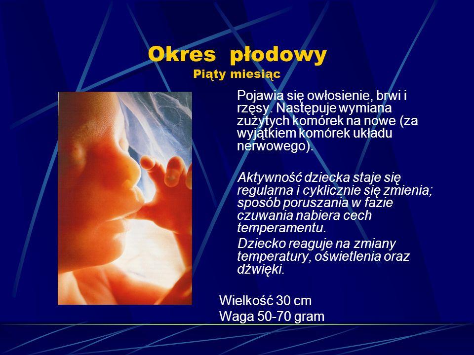 Okres płodowy Piąty miesiąc