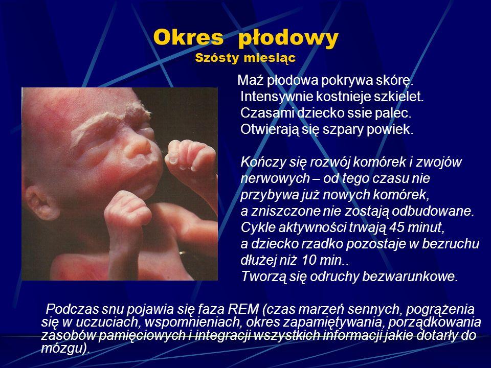 Okres płodowy Szósty miesiąc