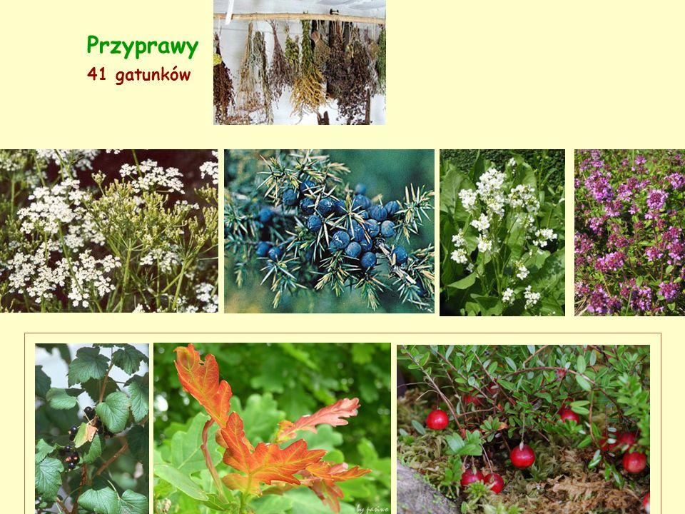 Przyprawy 41 gatunków