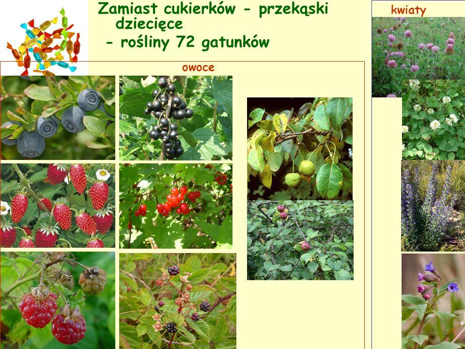Zamiast cukierków - przekąski dziecięce - rośliny 72 gatunków