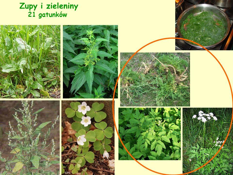 Zupy i zieleniny 21 gatunków