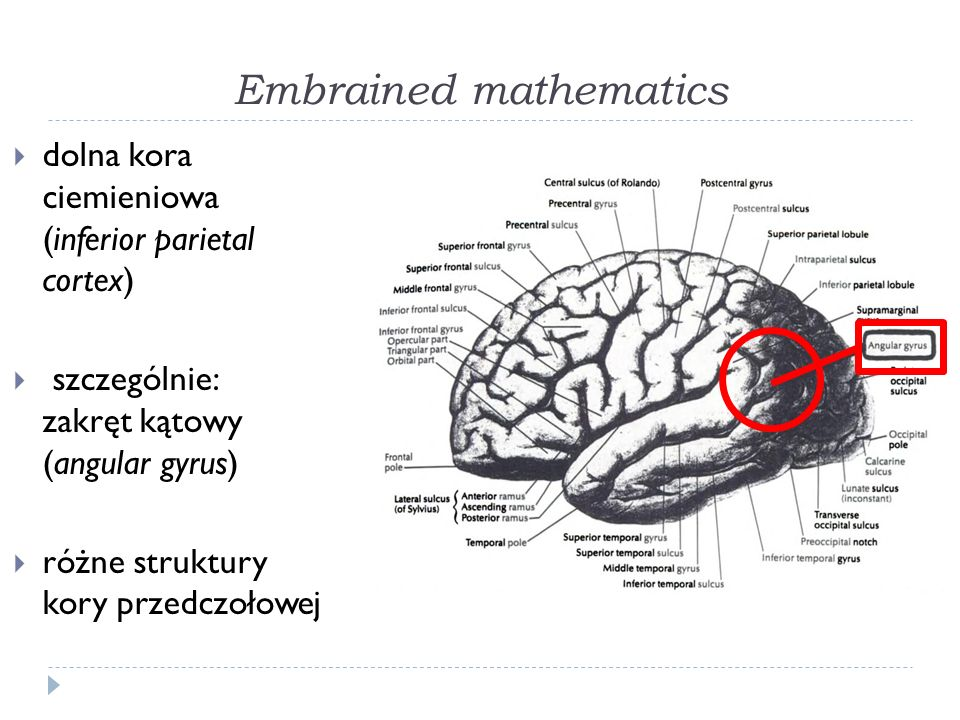Embrained mathematics