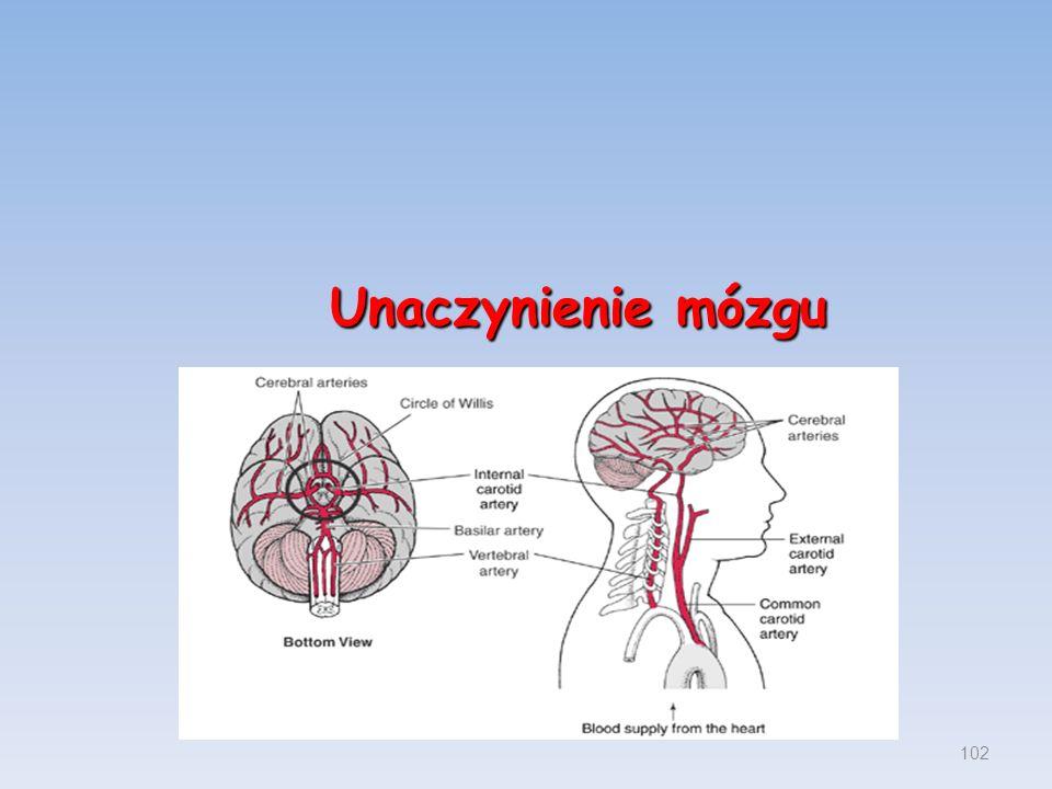 Unaczynienie mózgu