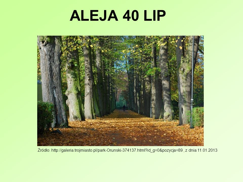 ALEJA 40 LIP Źródło: http://galeria.trojmiasto.pl/park-Orunski-374137.html id_g=0&pozycja=89 , z dnia 11.01.2013.