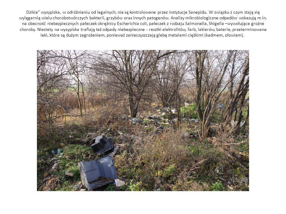 Dzikie wysypiska, w odróżnieniu od legalnych, nie są kontrolowane przez instytucje Sanepidu.