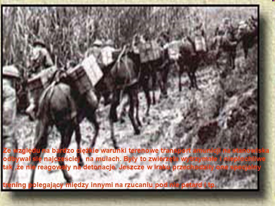 Ze względu na bardzo ciężkie warunki terenowe transport amunicji na stanowiska odbywał się najcześciej na mułach.