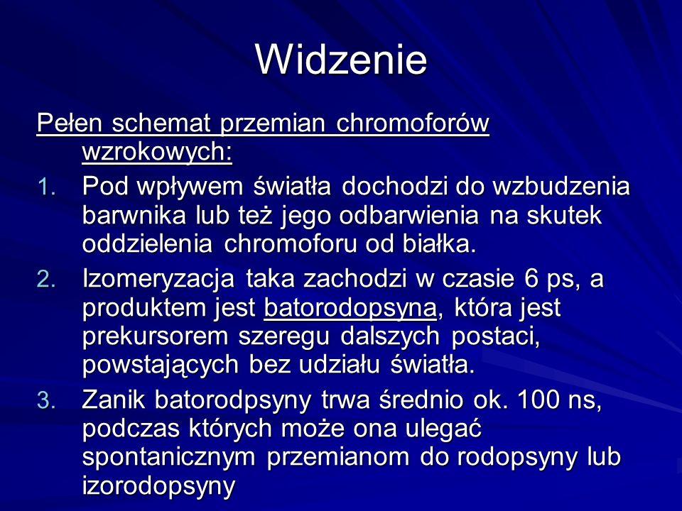 Widzenie Pełen schemat przemian chromoforów wzrokowych: