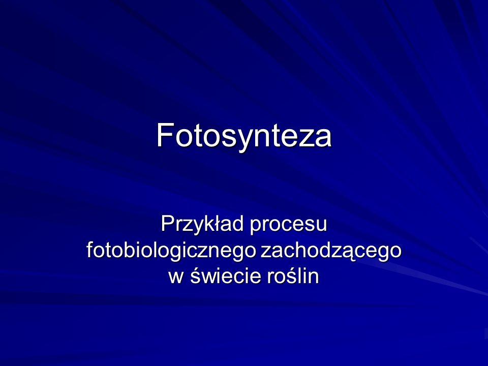 Przykład procesu fotobiologicznego zachodzącego w świecie roślin